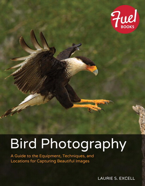 Bird Photography: A Guide to the Equipment, Techniques, and Locations for Capturing Beautiful Images